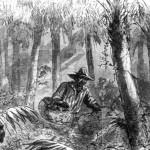 runaway slave in swamp